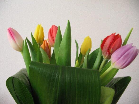 Budżet Holandii kontra budżet pracującego w kraju tulipanów – kto zyska, a kto straci?